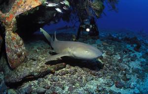 400-grenada-scuba-diving
